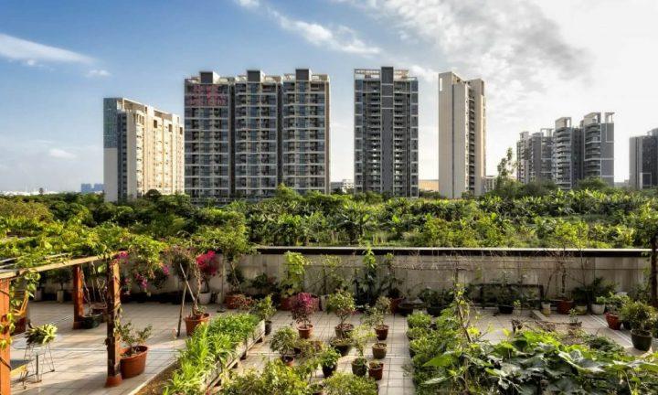 peluang-bisnis-ditengah-trend-urban-farming-masyarakat-kota